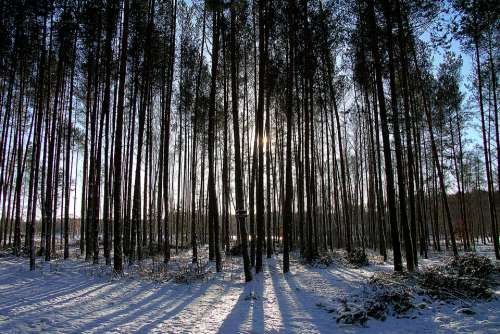 Forest Winter Landscape Nature Tree