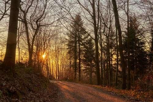 Forest Evening Sun Away Sunset Trees Autumn