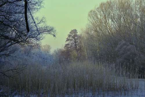 Forest Nature Winter Trees Frost Ice
