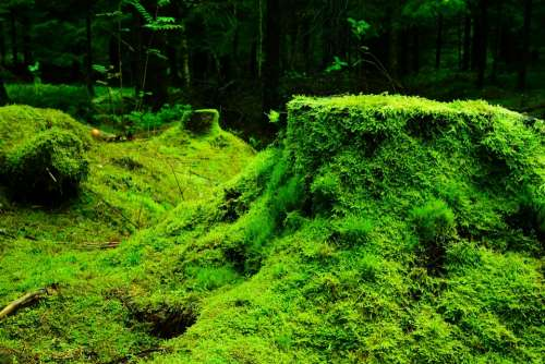 Forest Moss Nature Lush Green Vegetation
