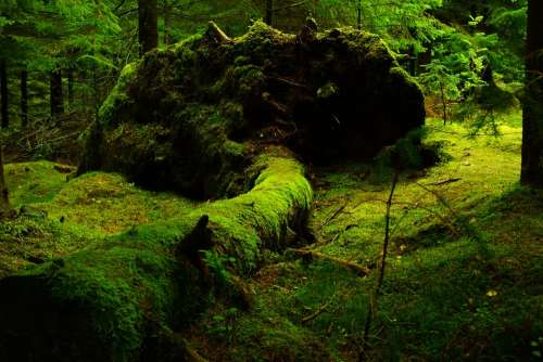 Forest Moss Nature Lush Green Vegetation