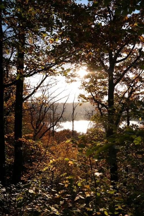 Forest Autumn Sun Backlighting Trees Leaves