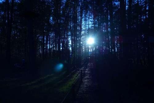 Forest Trees Sunrays Sunset Sunrise Light Sun