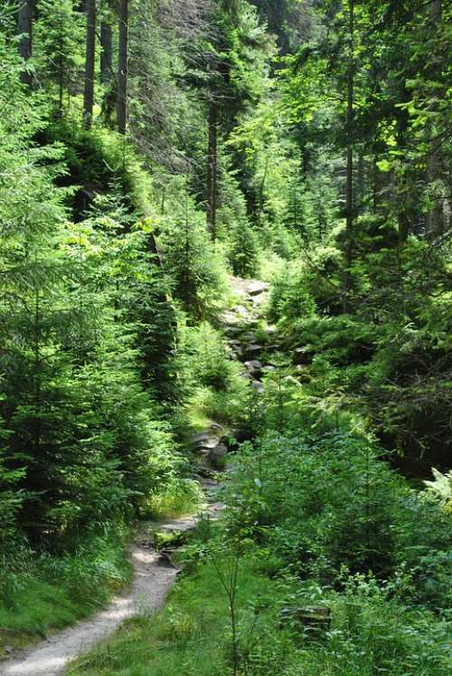 Forest The Path Tree Green Nature Foliage Way