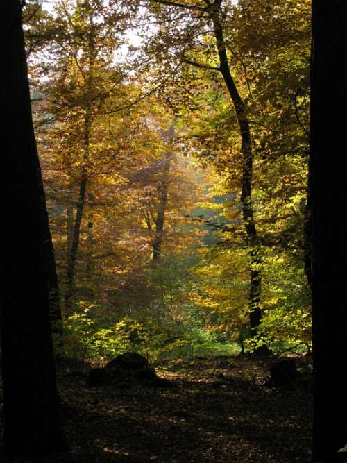 Forest Trees Nature Backlighting Autumn