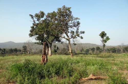 Forest Deciduous Tropical Grassland Nature Foliage