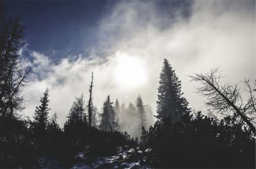 Forest Fog Mist Clouds Winter Snow Cold Frost