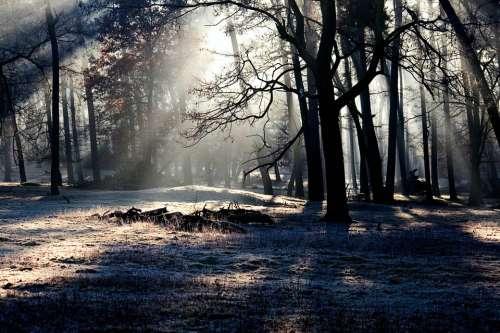 Forest Light Mood Light Beam Morgenstimmung