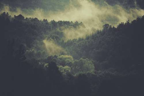 Forest Trees Fog Clouds Mist Nature Environment