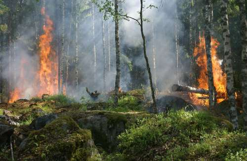 Forest Fire Fire Smoke Conservation