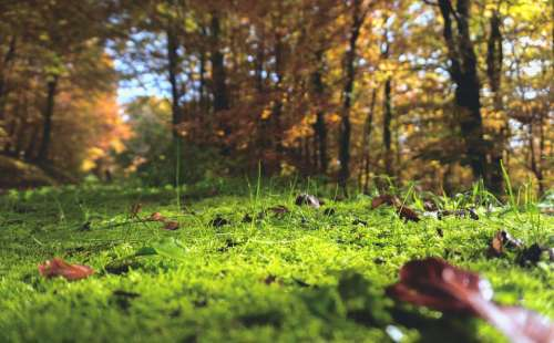 Forest Floor Moss Forest Nature Plant Green