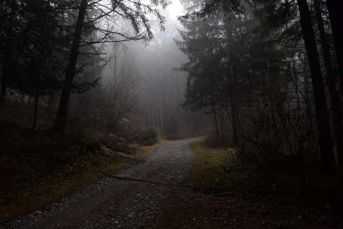 Forest Path Fog Forest Nature Mysterious