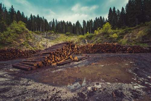 Forestry Logging Forest Deforestation Timber