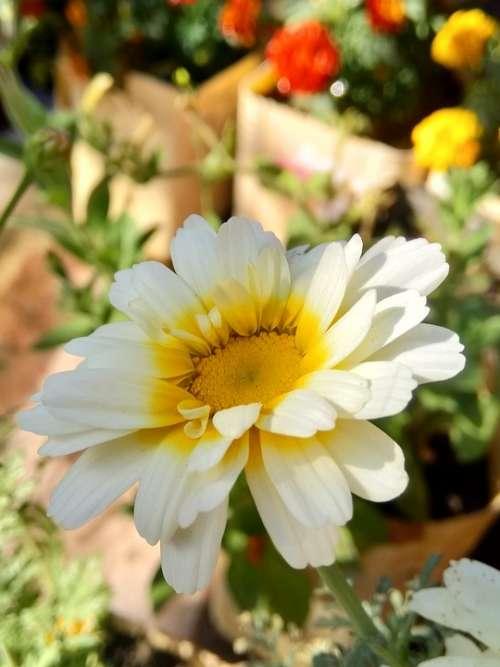Fresh Natural Flower White Nature