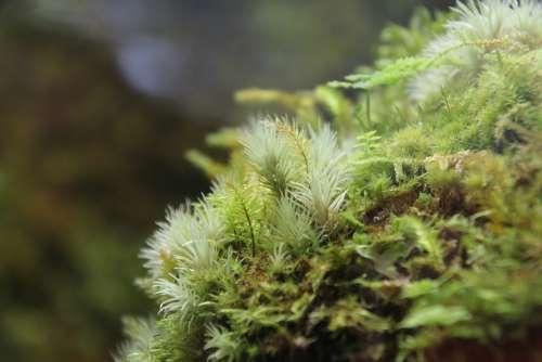 Fresh Moss Lichens Tiny Plants Plant Green