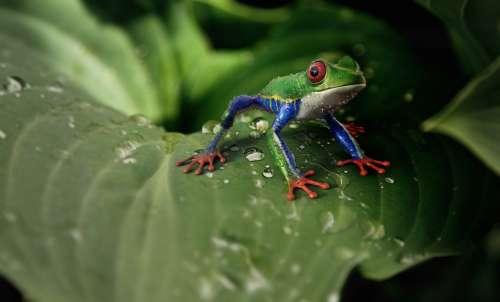Frog Amphibians Animal Animal World Exotic