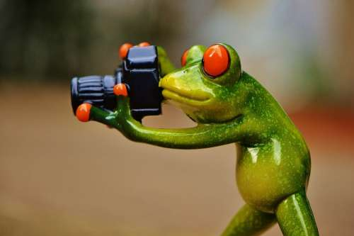 Frog Photographer Funny Fun Camera Green Animal