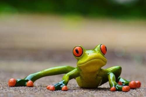 Frog Funny Figure Cute Animal Fun Green Sweet