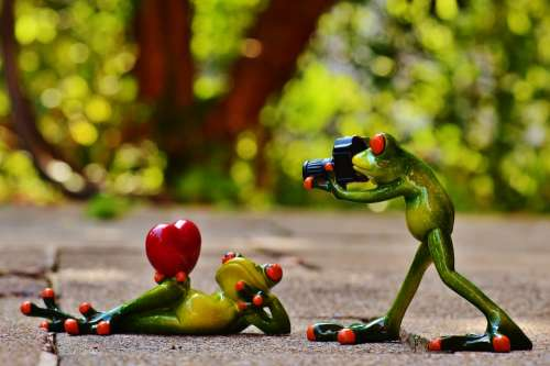 Frogs Love Valentine'S Day Pose Photographer