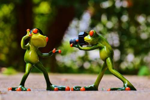 Frogs Headphones Music Dance Pose Photographer