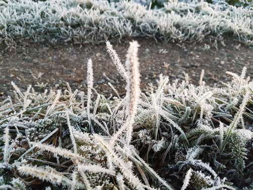 Frost Crystals Ice