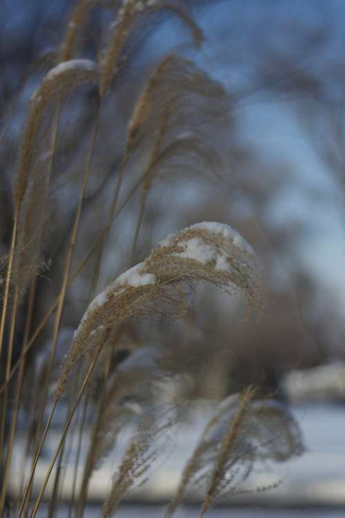 Frozen Grass Nature Cold Grasses Ice Freeze