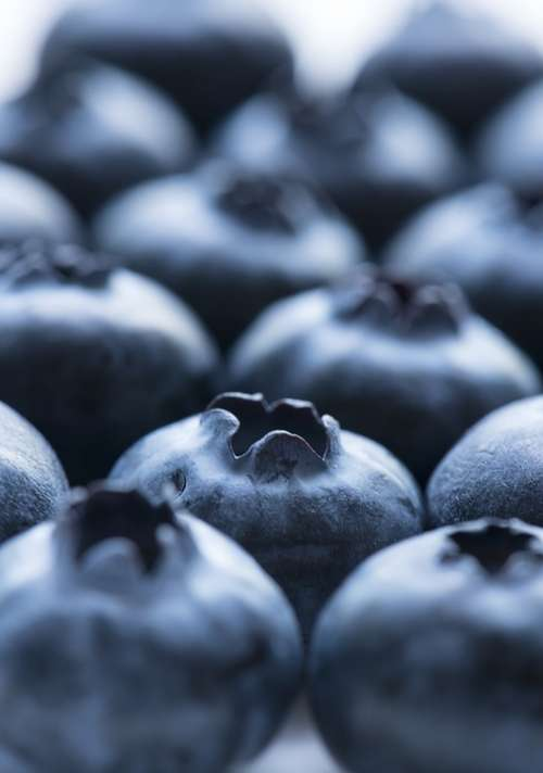 Fruit Blueberry Food Closeup Juicy Antioxidant
