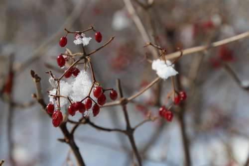 Fruit Snow Ice Winter Nature Landscape Wood
