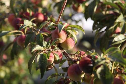 Fruit Fresh Healthy Food Vegetarian Nature Exotic