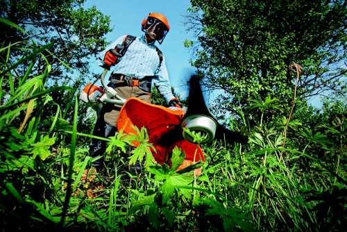 Garden Grass Cutter Gardening Grass Man Outdoors