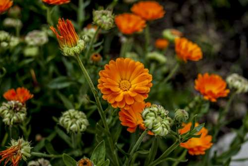 Garden Nature Flowers