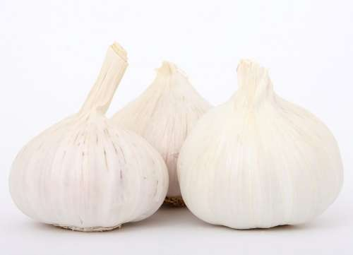 Garlic Cooking Flavor Flavour Food Fresh Healthy