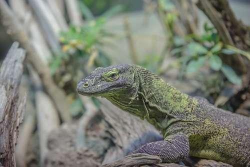 Gecko Lizard Animal Animal World Reptile Close Up
