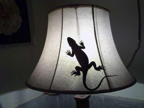 Gecko Lizard Reptile Reptilian Animal