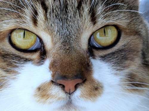 Gigi Feline Pet Piemonte