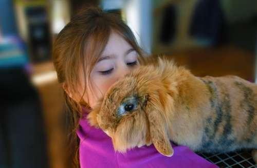 Girl Rabbit Pet Childhood