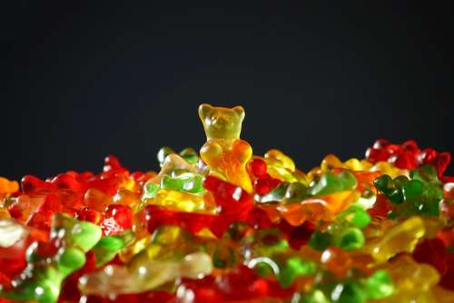Gold Bear Gummi Bears Bear Yellow Gummi Bear