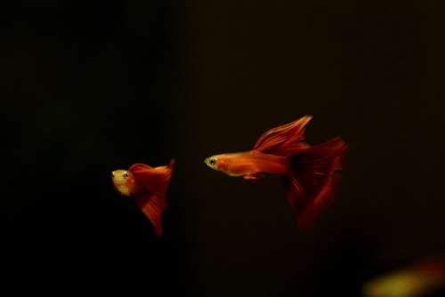 Goofy Tropical Fish Fish Fish Tank Water Life