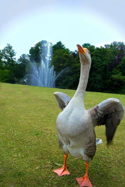 Goose Fountain Dancing Merry