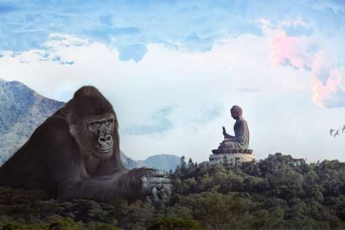 Gorilla Budda King Kong Giant Monkey Hong Kong