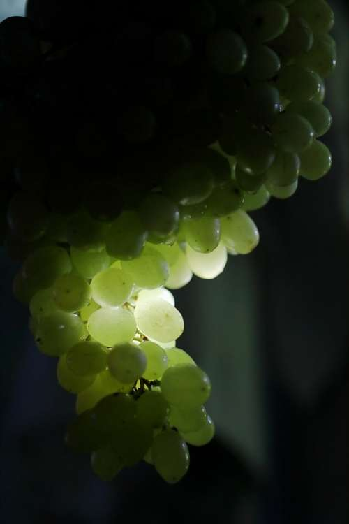 Grapes Fruit Healthy Food Green Fresh Nature