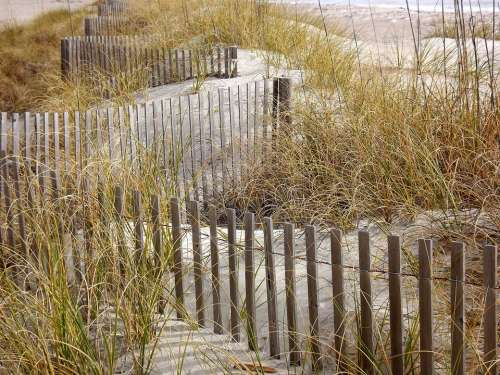 Grass Fence Sand Dunes Grasses Beach