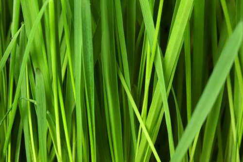 Grass Lawn Background Grassy Green Nature Pattern