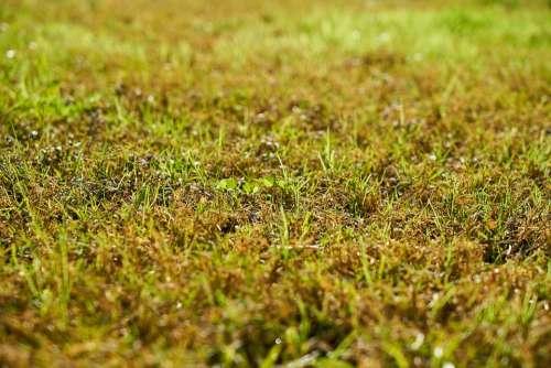 Grass Nature Chan Landscape Green Plant Summer