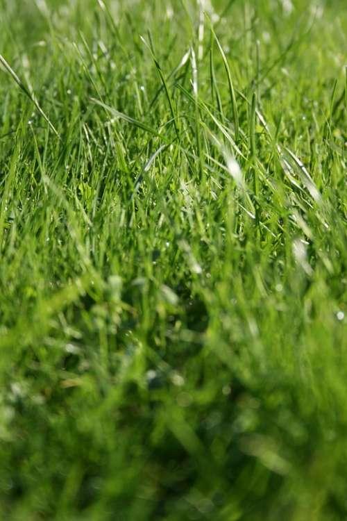 Grass Wild Meadow Green Blade Of Grass Monochrome