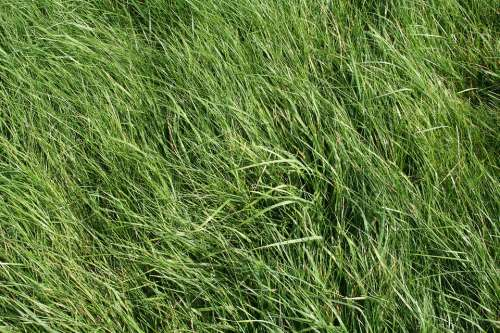 Grass Meadow Green Field Grasses Structure