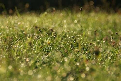 Grass Waterdrop Morning Sunlight Nature Water