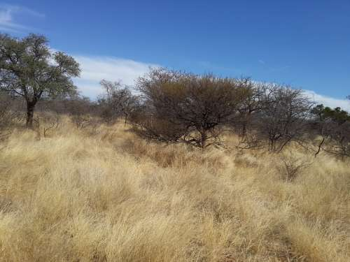 Grass Land Veld Draught African Bush