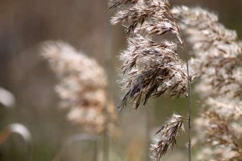 Grasses Bloom Beige Nature Wind Movement Close Up
