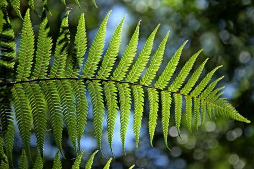 Green Fern Leaf Natural